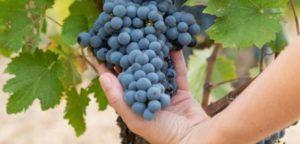 Master 2 « Droit rural des affaires option droit de la vigne et du vin